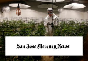 Mike Lynn prompts the pot talk in San Jose Mercury News