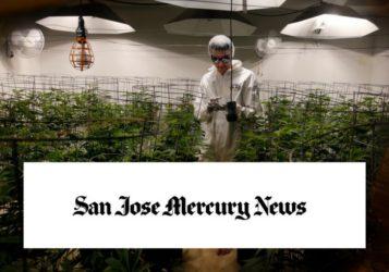 Mike Lynn prompts the pot talk in San Jose Mercury News